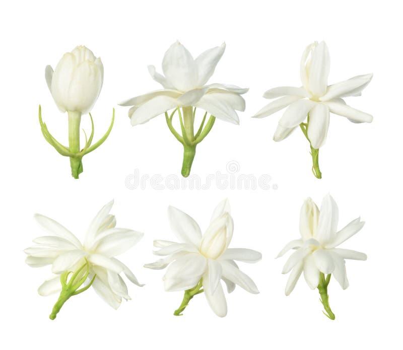 Witte bloem, Thaise die jasmijnbloem op witte achtergrond wordt geïsoleerd royalty-vrije stock foto