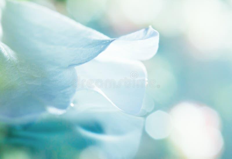 Witte bloemblaadjedroom royalty-vrije stock afbeeldingen