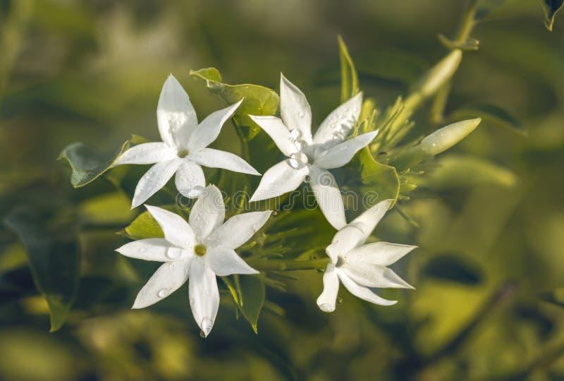 Witte Bloemblaadjes op Zonsondergang stock afbeeldingen