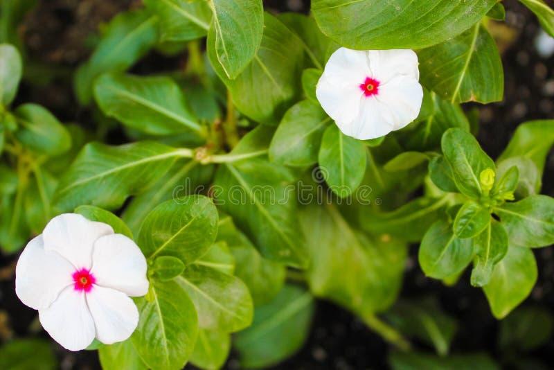 Witte Bloemdetail het Bloeien Schoonheid stock foto's