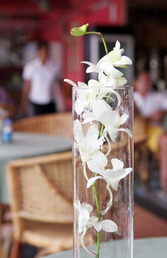 Witte bloemen stock foto
