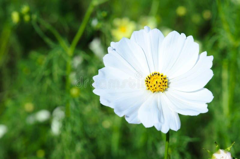 Witte bloemen. stock afbeeldingen