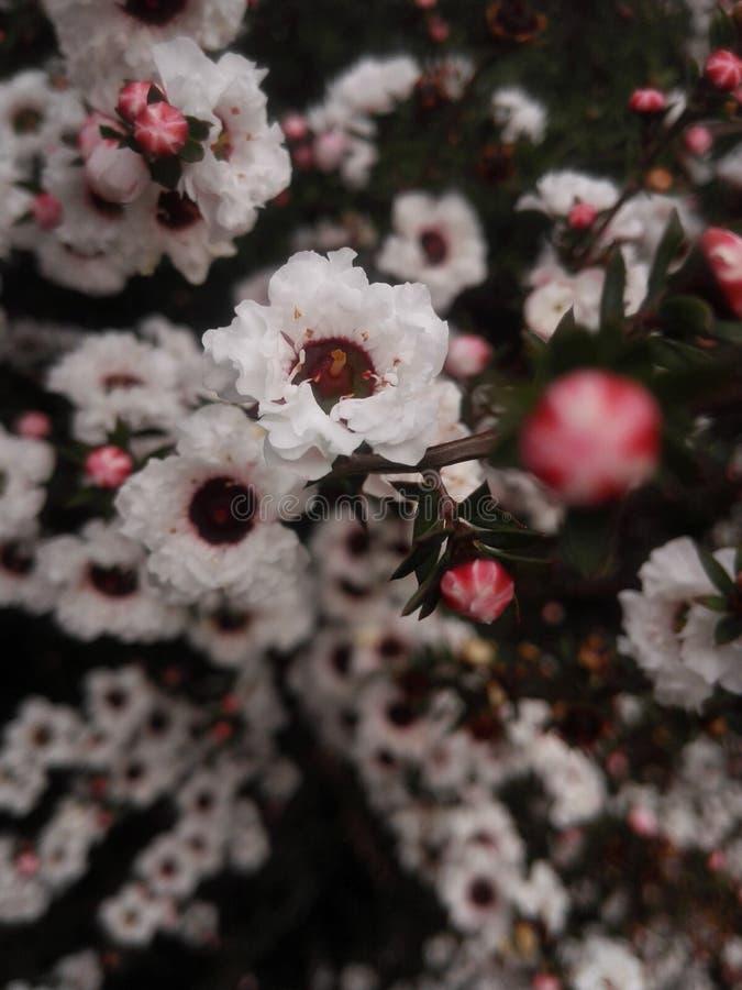 Witte bloemen stock foto's