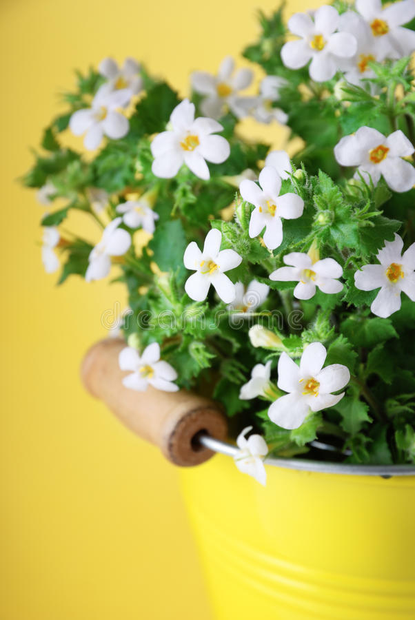 Witte bloemen op gele achtergrond stock afbeeldingen