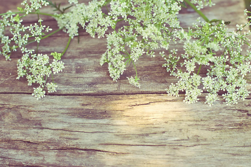 Witte bloemen op uitstekende houten achtergrond royalty-vrije stock foto's