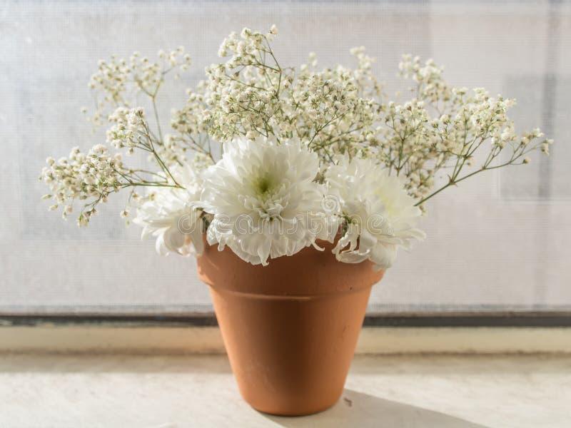 Witte bloemen in oranje pot royalty-vrije stock fotografie