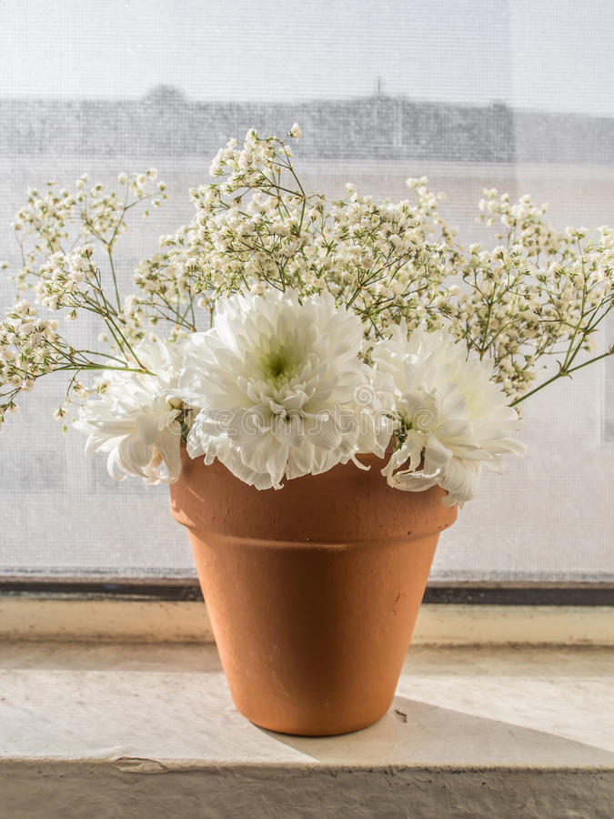 Witte bloemen in pot royalty-vrije stock afbeelding