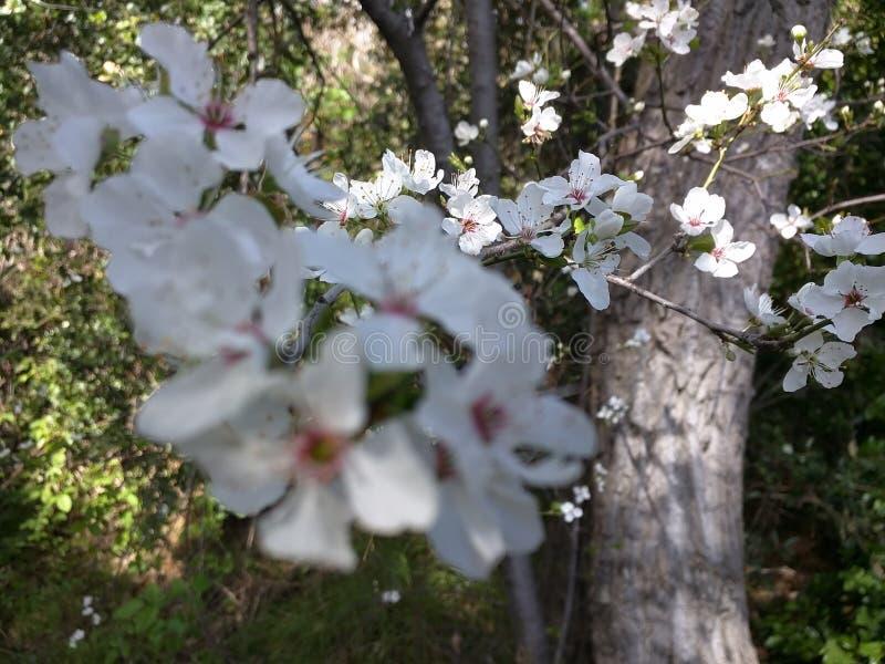 Witte bloemen tijdens de winter! stock afbeeldingen