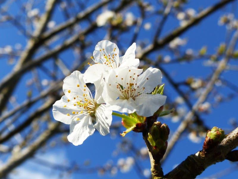 Witte bloemenclose-up stock afbeeldingen