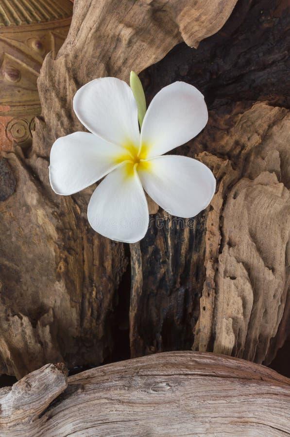 Witte bloemplumeria met oud gebakken kleivaas en hout houten B stock fotografie