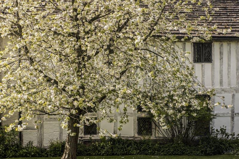 Witte Bloesems met Wit Gericht Huis stock foto