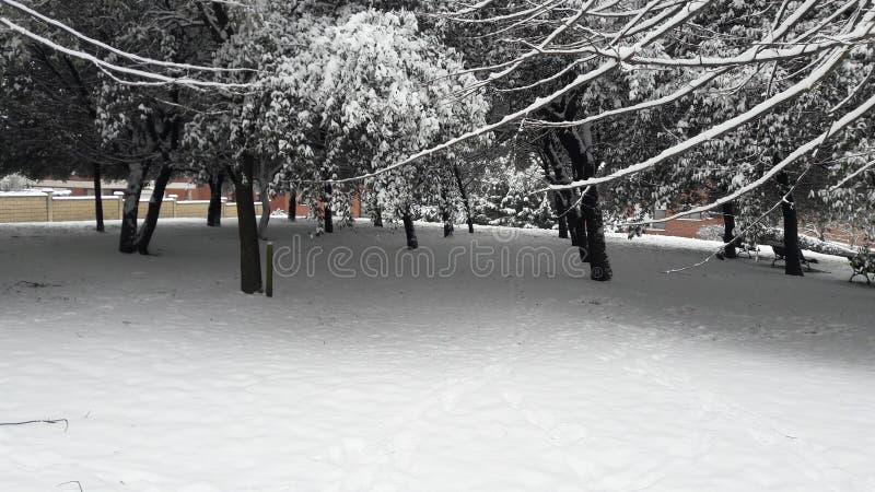 Witte bomen stock afbeeldingen