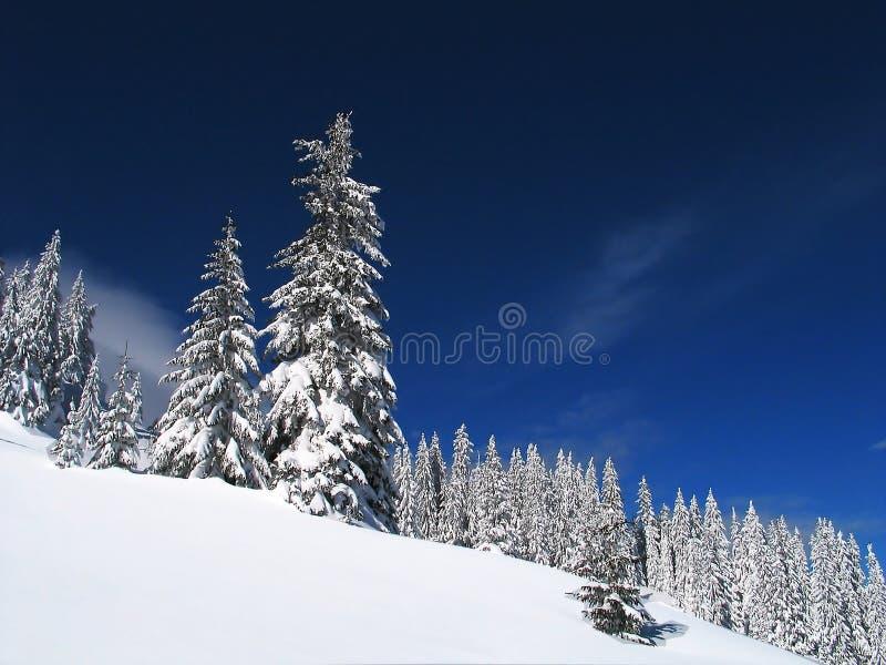 Witte bomen stock foto's