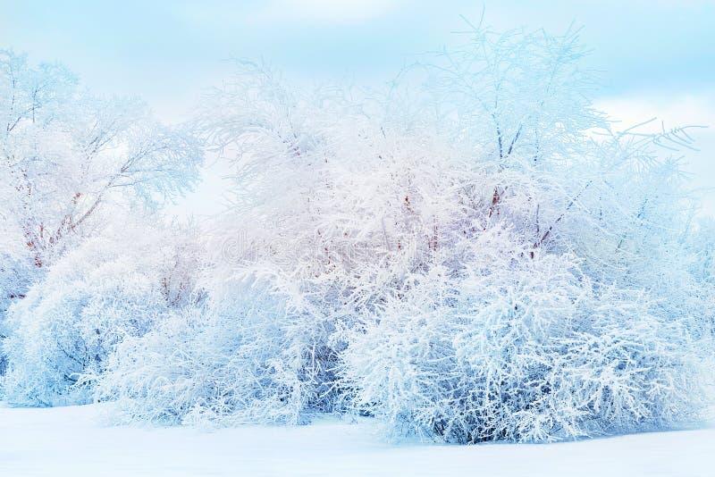Witte bomen in de sneeuw in het bos Mooie de winterlandschap De achtergrond van Kerstmis stock foto