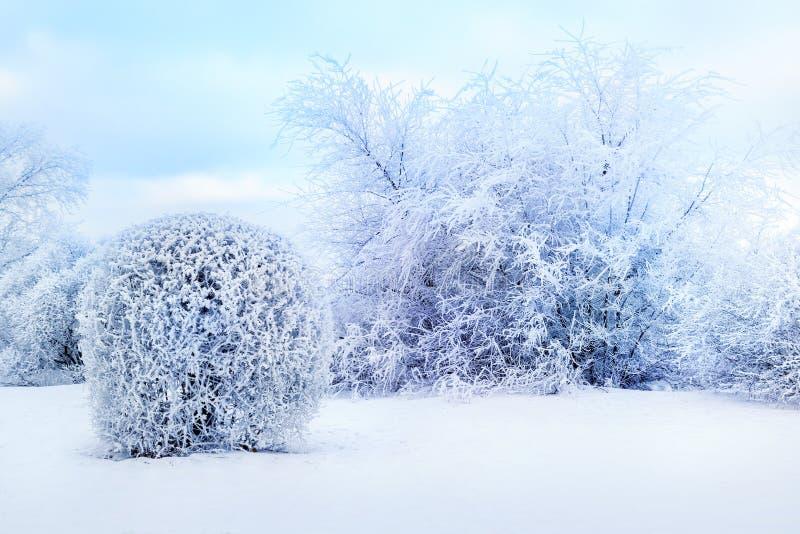 Witte bomen in de sneeuw in het stadspark Mooi de winterlandscape royalty-vrije stock afbeelding
