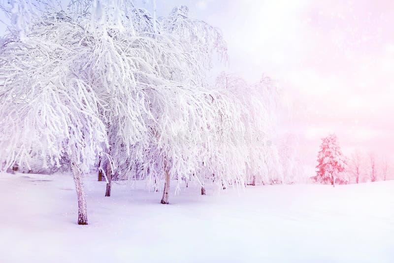 Witte bomen in de sneeuw in het stadspark Mooi de winterlandschap in roze en blauwe kleur royalty-vrije stock afbeeldingen
