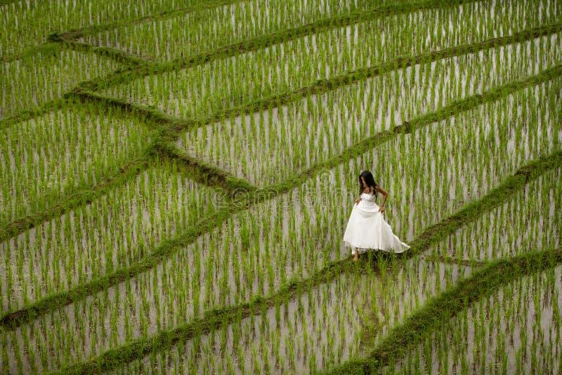 Witte bruids kleding met mooie romantische jonge vrouw op terrasvormig padiegebied royalty-vrije stock afbeelding