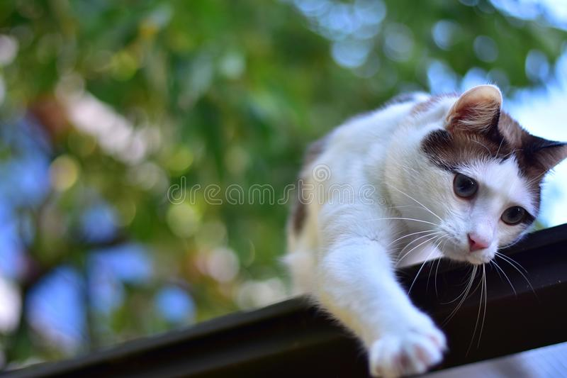 Witte Bruine Cat Blurred-achtergrond royalty-vrije stock foto's