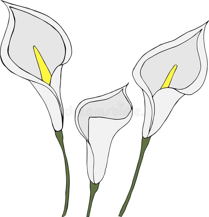 Witte callas op witte achtergrond vector illustratie