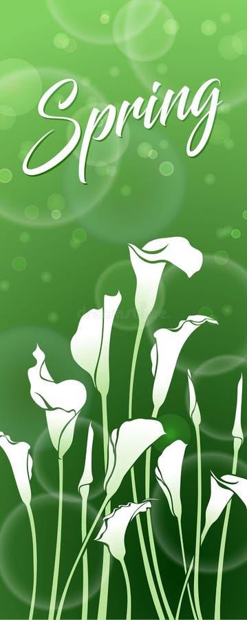 Witte callas op een groene achtergrond met bokeheffect De lentebeeld royalty-vrije illustratie
