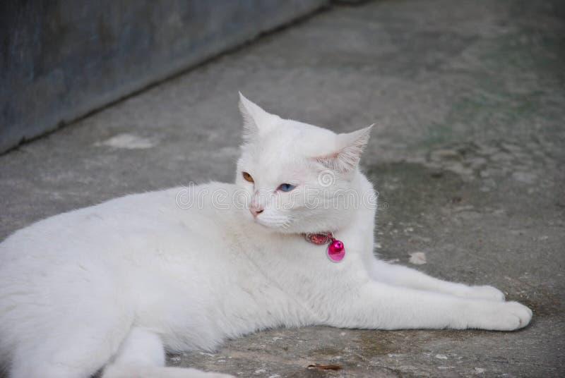 Witte Cat Eye Color Yellow en blauw royalty-vrije stock afbeeldingen