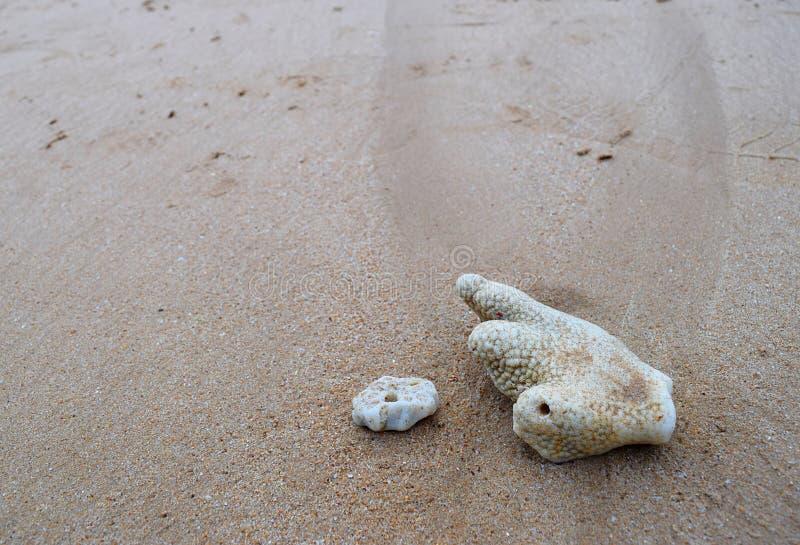 Witte Coral Stones in Sandy Beach - Abstracte Textuur Natuurlijke Kustmarine background stock foto