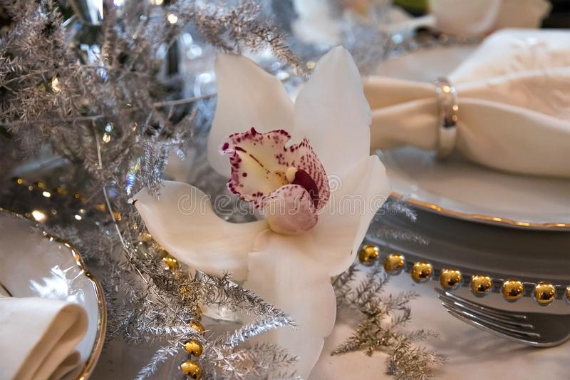 Witte Cymbidium-Orchidee royalty-vrije stock afbeelding