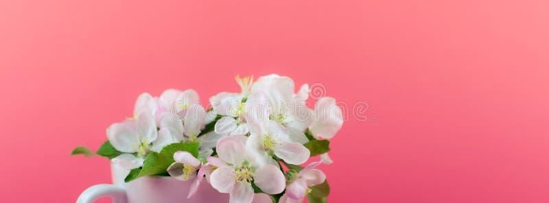 Witte de boom bloeiende bloemen van de de lenteappel in een kop stock afbeelding