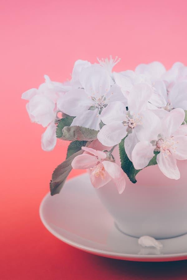 Witte de boom bloeiende bloemen van de de lenteappel in een kop stock afbeeldingen