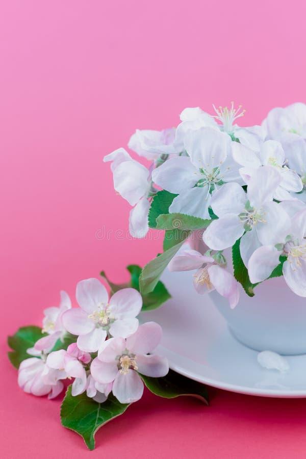Witte de boom bloeiende bloemen van de de lenteappel in een kop royalty-vrije stock fotografie