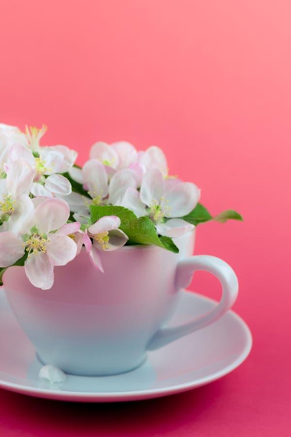 Witte de boom bloeiende bloemen van de de lenteappel in een kop stock foto's