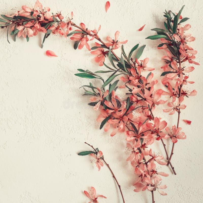Witte de lenteachtergrond met een twijg van bloeiende amandelen stock foto's