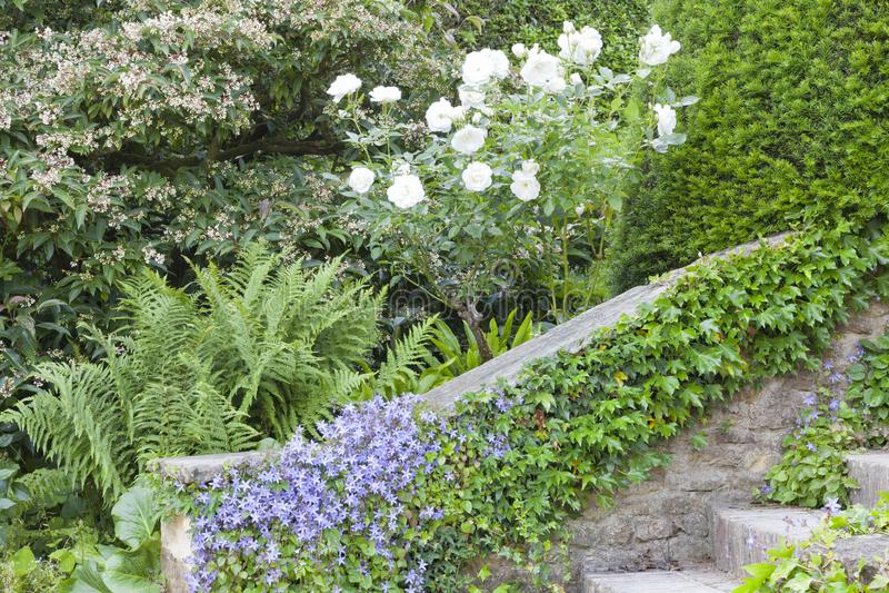 Witte die rozen door een steentreden door bloemen en klimop worden behandeld royalty-vrije stock foto's