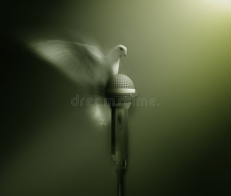Witte duif stock foto