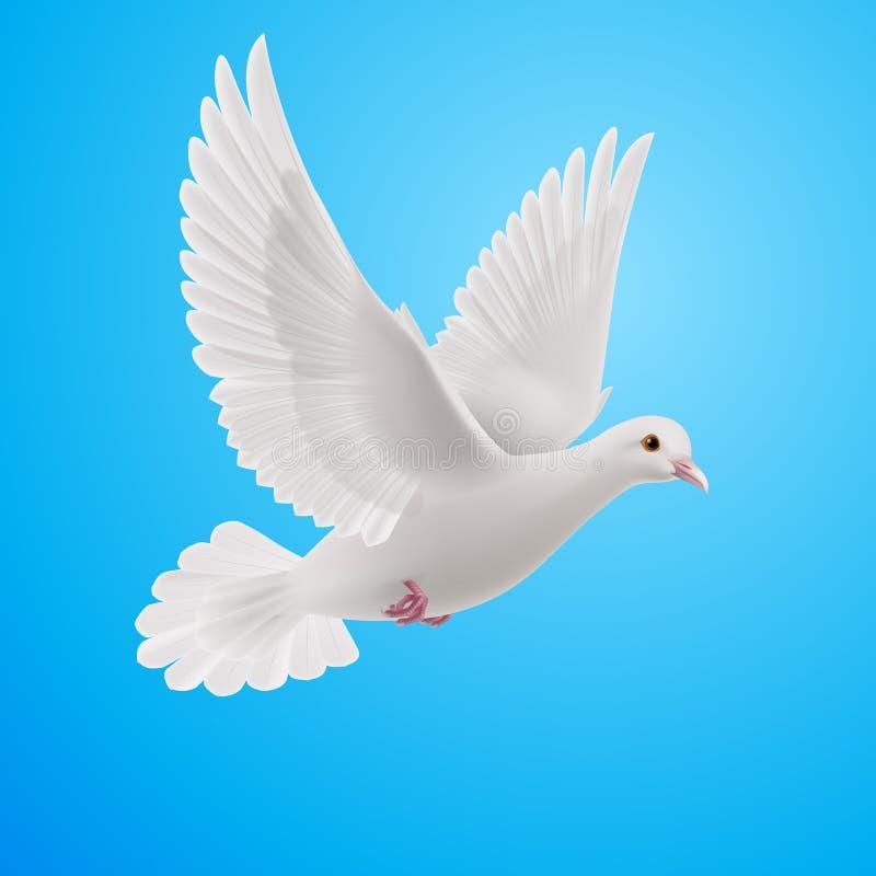 Witte duif royalty-vrije illustratie