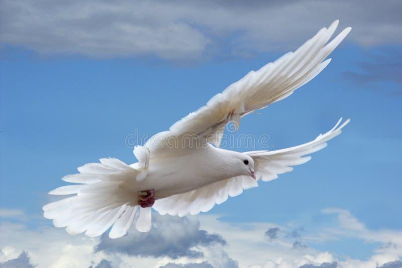 Witte duif in de hemelen royalty-vrije stock afbeelding
