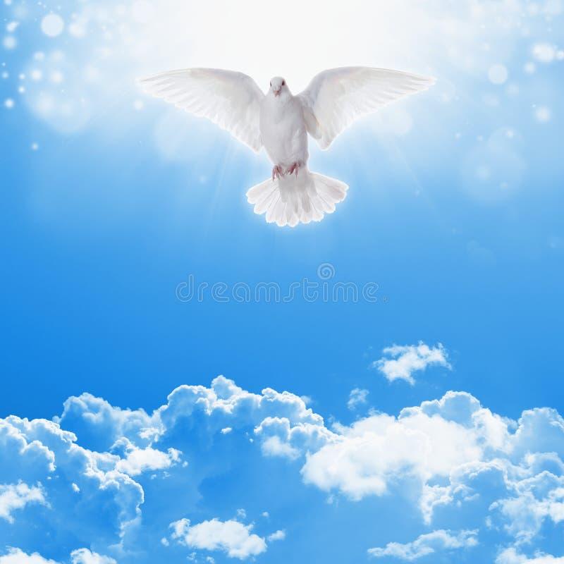 Witte duif in hemel royalty-vrije stock foto's