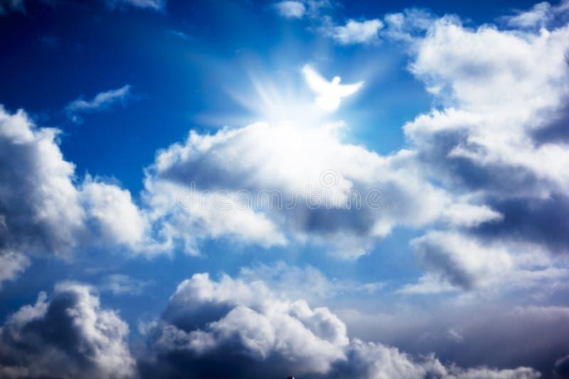 Witte duif in hemelse hemel stock foto's