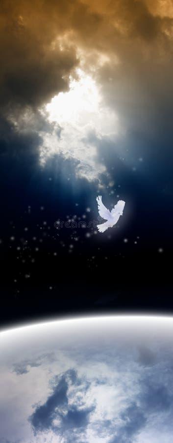 Witte duif van hemel stock foto's