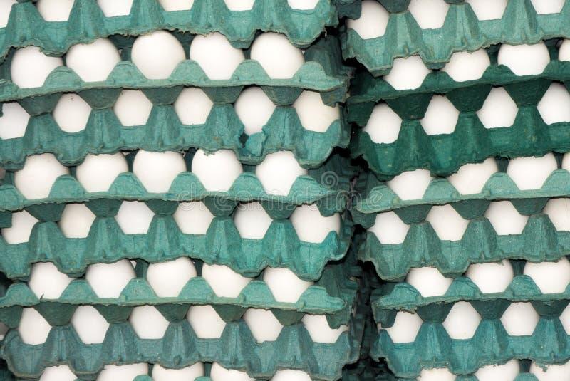 Witte eieren in blauwe dienbladen royalty-vrije stock foto's