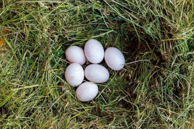 Witte eieren in groen gras stock foto's