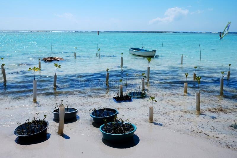 Witte en blauwe motorboten in de blauwe overzeese baaiscène Motorboot met reddingsvesten Toeristisch concept stock fotografie