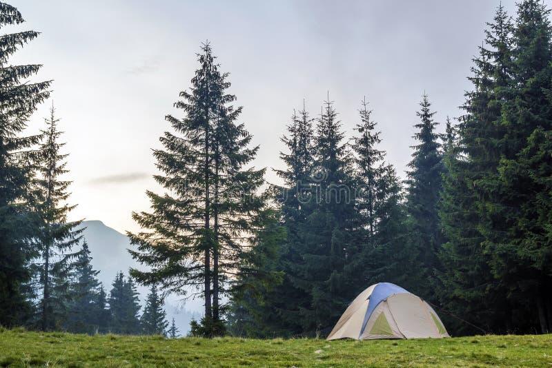 Witte en blauwe toeristentent op groene weide tussen altijdgroen sparrenbos met mooie berg in afstand Het toerisme, overtreft royalty-vrije stock afbeelding