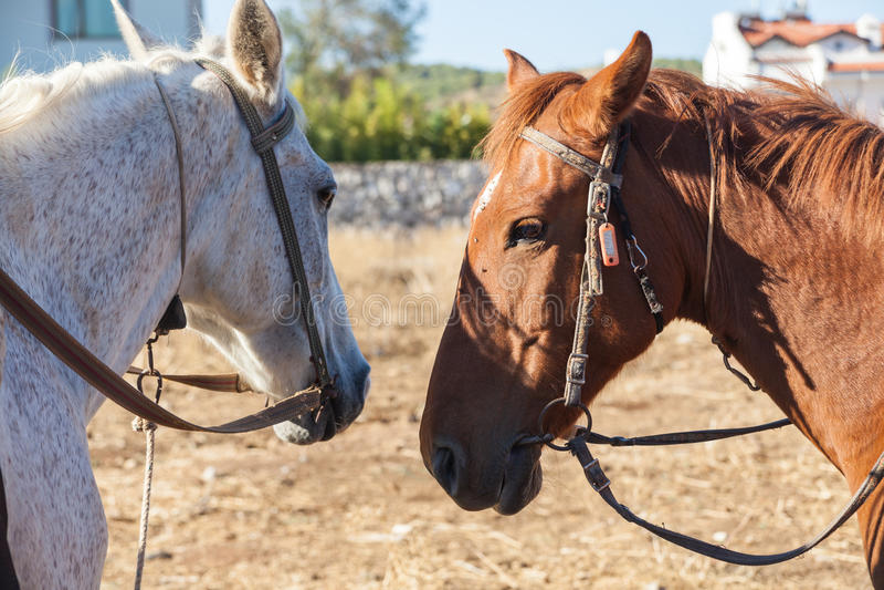 Witte en bruine paarden op het landbouwbedrijf royalty-vrije stock fotografie