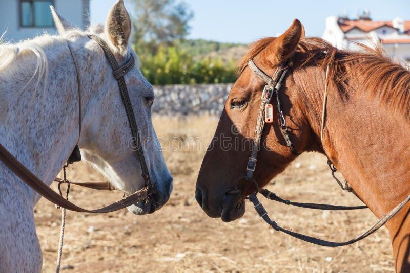 Witte en bruine paarden op het landbouwbedrijf royalty-vrije stock afbeeldingen