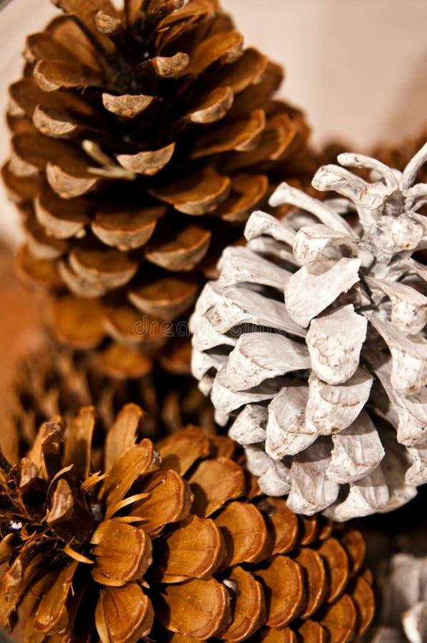 Witte en bruine pinecones als huisdecoratie stock fotografie