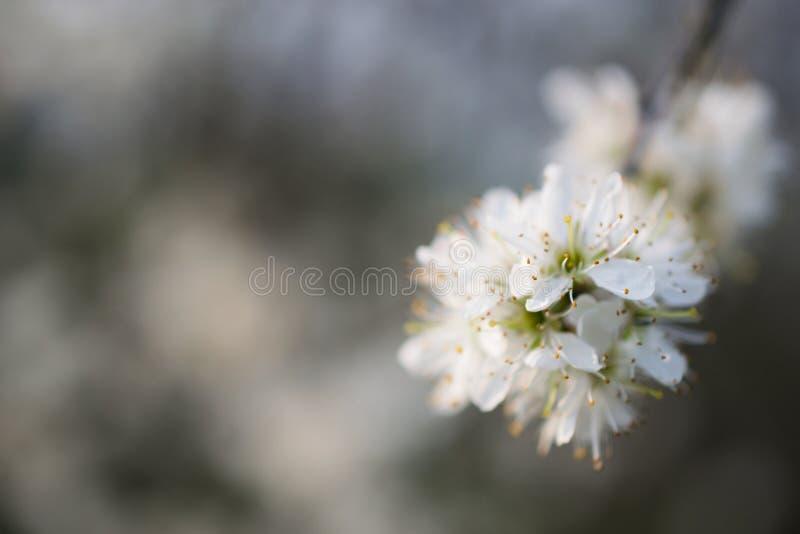 Witte en gele bloem royalty-vrije stock afbeeldingen