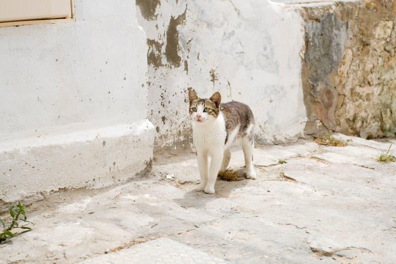 Witte en grijze kat die de straten van Sidi Bou Said lopen royalty-vrije stock afbeelding