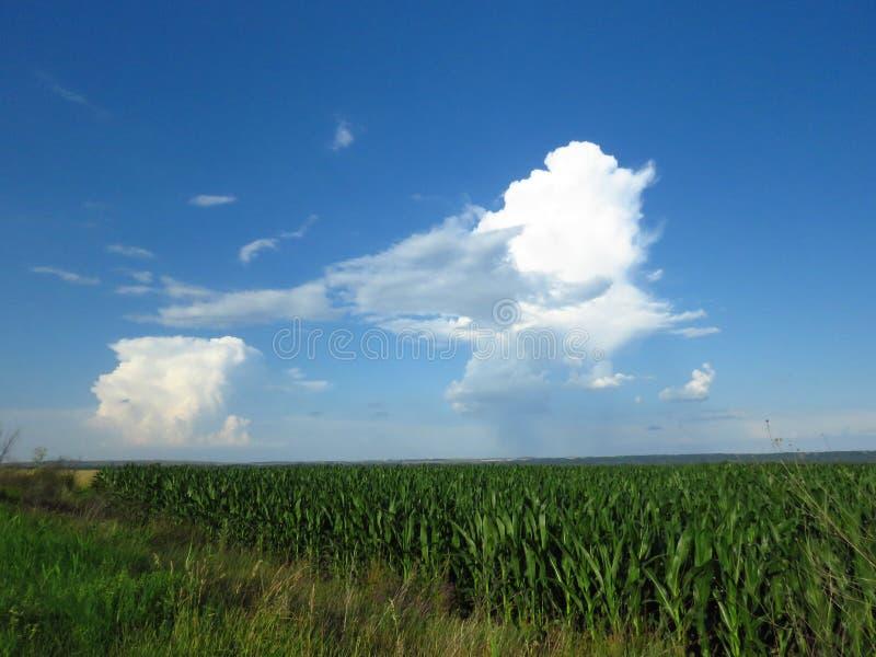Witte en grijze wolken in blauwe hemel Stormachtige regenachtige weervoorspelling stock fotografie