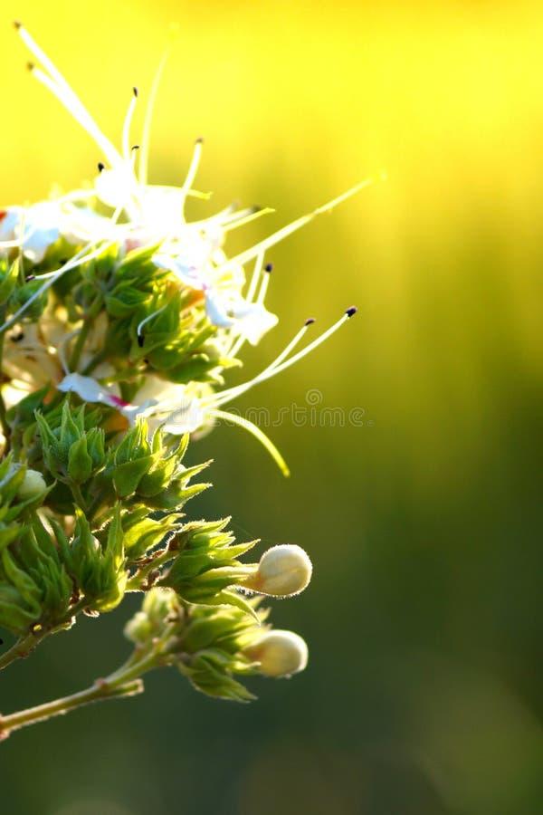 Witte en groene mooie bloemen royalty-vrije stock afbeelding